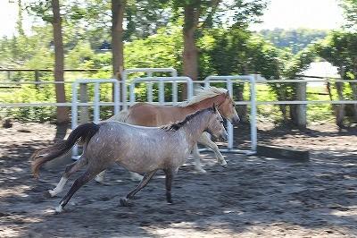 放牧は乗馬クラブに絶対必要