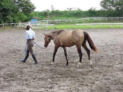 馬のグランドワーク