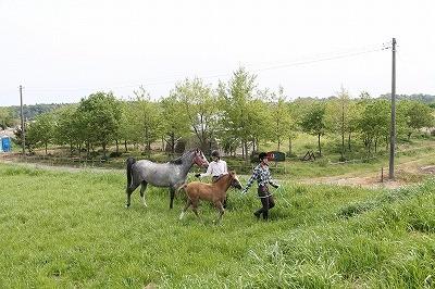 子馬と散歩