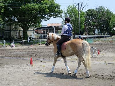 乗馬の練習方法