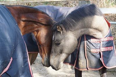 愛しい馬達