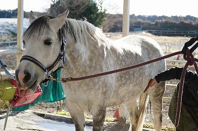 幸せな乗馬を選ぶ人が増えれば幸せな馬が増える