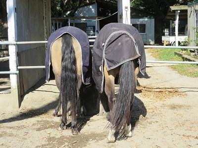 仲良しの馬達