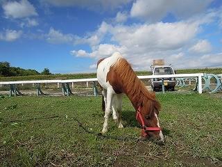 千葉の青空と乗馬クラブ
