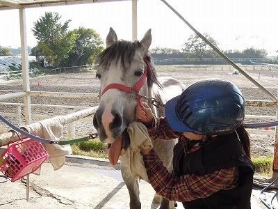 これがウィッシュの乗馬