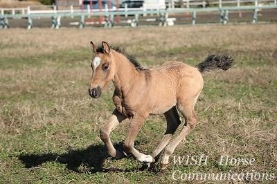 馬を育てられる牧場