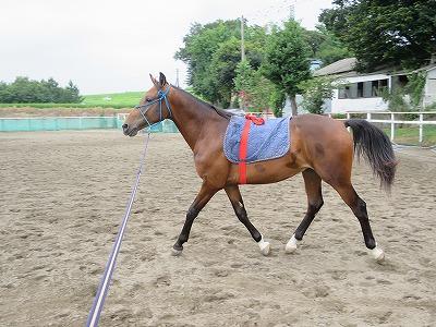 馬の健康と信頼関係が基本です。