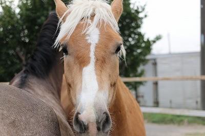 ついに馬達が日本語をしゃべるようになりました