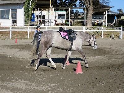 乗馬の基礎は馬とのコミュニケーション
