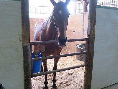 馬がこんなにも愛してくれる