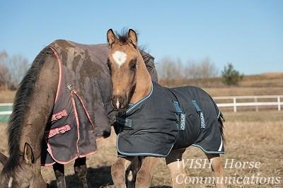 馬の育成はほんと大変