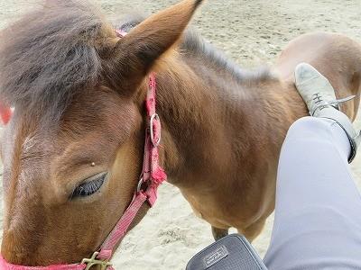 新馬調教 肢で愛撫