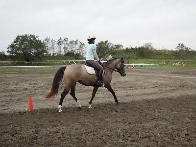 乗馬が上達した方が馬も幸せ