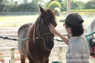馬とのコミュニケーションを学ぼう