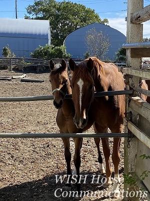 乗馬の愛情風景