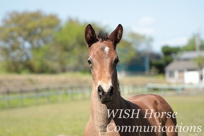 馬の心と向き合う乗馬