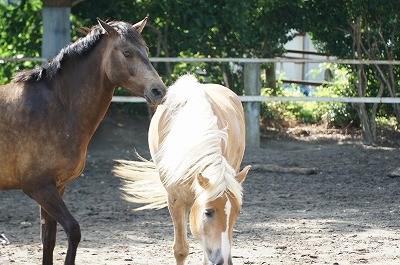 光り輝く馬