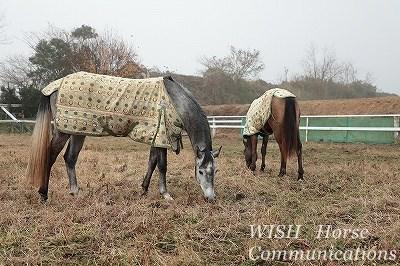 霧の中の馬たち