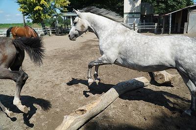 馬に馬らしい生活を!