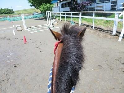新馬調教 乗ってのサインを作る