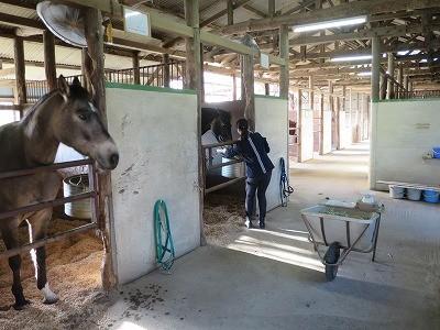 馬を世話するのがとても楽しい