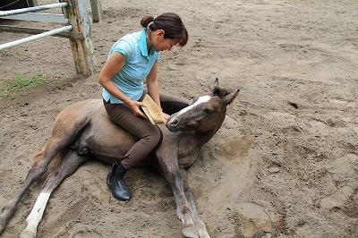 子馬の調教
