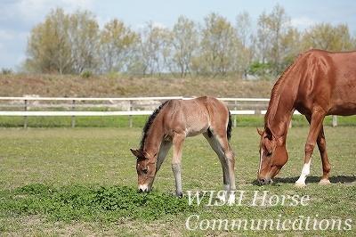 乗馬の放牧と牧草地