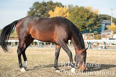 馬と秋の風景