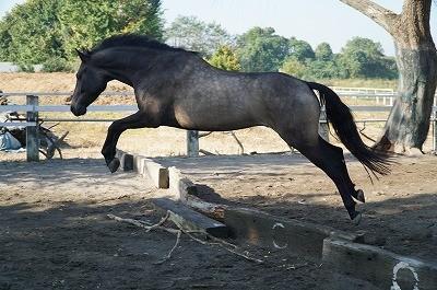 馬の美しさ