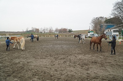馬とのグランドワークの練習ができます
