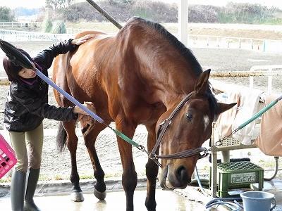 馬の恍惚の表情