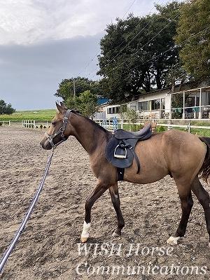 愛馬精神の乗馬