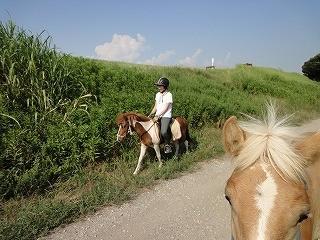 乗馬外乗と馬のお散歩
