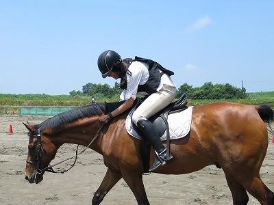 優しい馬と楽しいひとときを