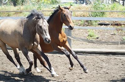 生き生きとした馬達