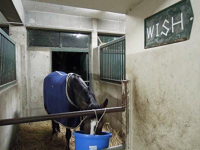 夕飼いを食べる馬今日も一日おつかれさま