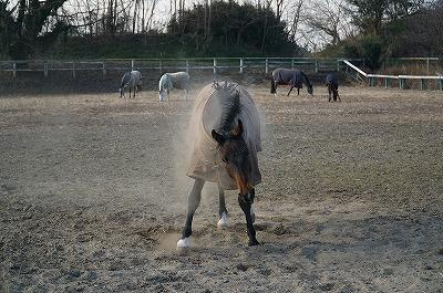 馬の身震いは大迫力