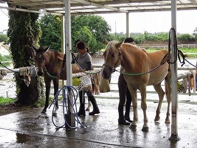 馬のマッサージ講習会