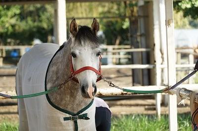 乗馬は愛情