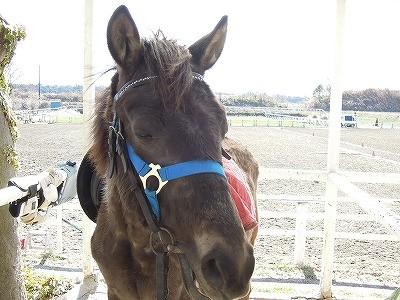 気持ちよさそうな馬の顔