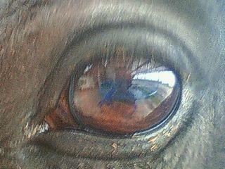 馬の瞳に映るもの