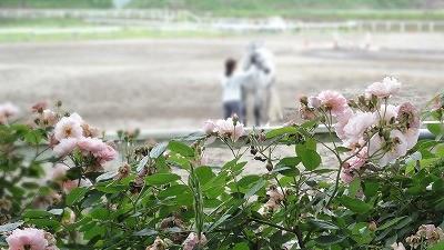 バラコーネリアと白い馬