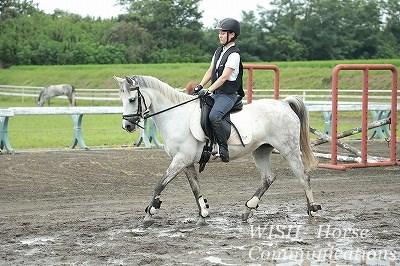 美しい馬の姿勢