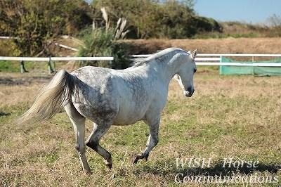 美しい馬の曲線美