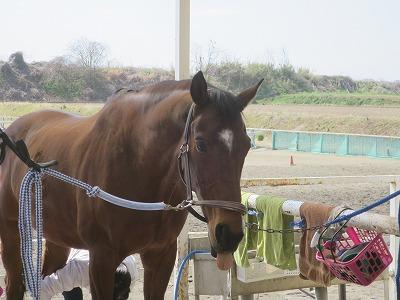 馬とハートウォーミングタイム