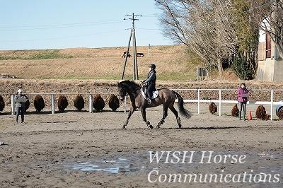 乗馬の美しい騎座