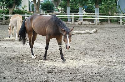 痩せた馬や張りのない馬で何かしてはいけないよ