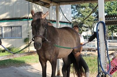 馬と心の絆を結ぶ