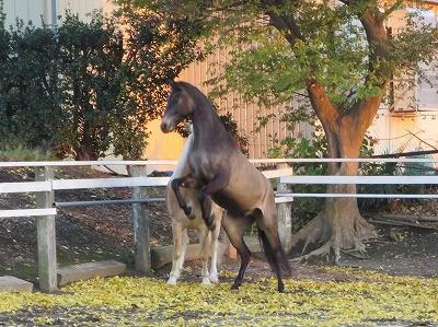 馬と金色のじゅうたん