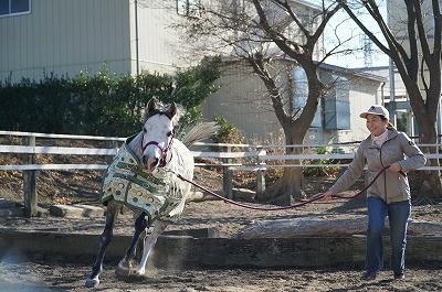 馬とジャンプ!